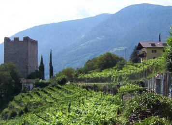 Spätestens seit der Römerzeit wird Wein auch in Europa angebaut (Foto: © Dirk Schmidt, pixelio.de)